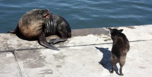 Tierisches Spektakel im Hafen von Mar Del Plata - Foto: Arabell Walter